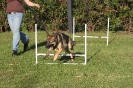 Amber - learning agility