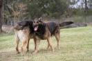 Bindi & Ace playing
