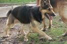 Chikki at 4 years