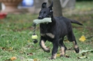 Arlyces female pup - 2011