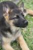 Previous Puppy Photos